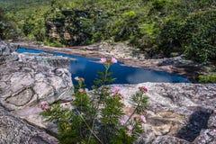 Полевые цветки и река, Chapada Diamantina, Бахя, Бразилия стоковое изображение rf