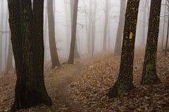 Полесья отстают в тумане стоковые изображения