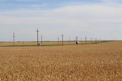 Поле пшеницы под голубым небом и облаками рядом со следом на котором редко управляйте автомобилями стоковые изображения