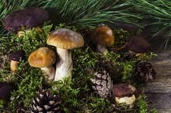 Польские и белые грибы на деревянной предпосылке 2 стоковые изображения rf