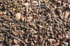 Пол леса под деревом бука стоковые изображения rf