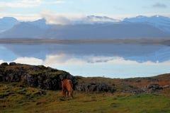 Пони отражает стоковое изображение