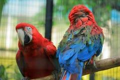 Попугай в парке живой природы Пекин стоковое фото