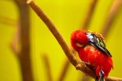 Попугай в парке живой природы Пекин стоковое фото rf