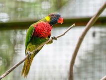 Попугай, парк птицы Куалаа-Лумпур стоковые изображения rf