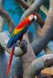 Попугай сидит на ветви стоковые фотографии rf