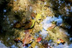 Подача rill осени Водопад природы - предпосылка изображения стоковое изображение rf