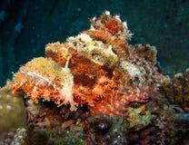 Подводный мир в глубоководье в коралловом рифе и флоре цветков заводов в живой природе голубого мира морских, рыбах, кораллах и т стоковое изображение rf