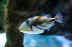 Подводное изображение кораллового рифа и тропических рыб стоковое фото