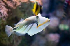 Подводное изображение кораллового рифа и тропических рыб стоковое фото rf
