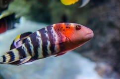 Подводное изображение кораллового рифа и тропических рыб стоковые фотографии rf