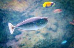 Подводное изображение кораллового рифа и тропических рыб стоковые изображения