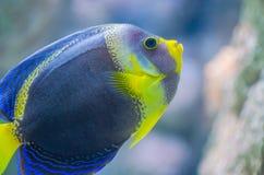 Подводное изображение кораллового рифа и тропических рыб стоковые изображения rf