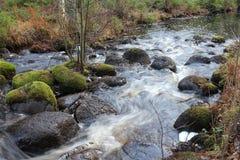 Поток леса с камнями стоковые изображения