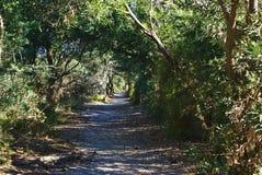 похожий на Тоннел идя путь в лесе стоковая фотография