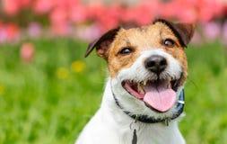 Портрет добросердечной усмехаясь собаки против красочной предпосылки весны стоковые фото