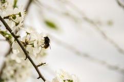 ÐŸÑ 'руР¹ Ñ ‹Ð ½ Ñ Ð¸Ð ‡ ÐΜл/работа пчелы стоковое изображение