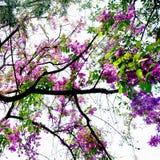 ПŒ¸ и небо цветка Стоковое Изображение RF