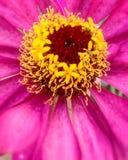 ПŒ¸ da flor Fotografia de Stock