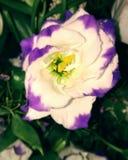 ПŒ del fiore·¹ del 🌠Fotografie Stock