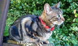 😔猫 免版税库存图片