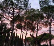 П'ž cor-de-rosa bonito do céu fotografia de stock royalty free