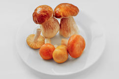 Мushrooms on a white plate Stock Photography
