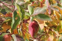 """КраÑ- ки Ð ¾ Ñ  Ð?Ð ½ и ÐšÑƒÑ Ð¸Ðº ½ арР'Ñ  Ð"""" Ð?Ñ€Ð?Ð-½ Farben des Herbstes lizenzfreies stockbild"""