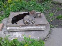 Кhree多彩多姿猫睡觉 库存照片