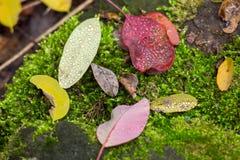 ÐžÑ  'ÑŒÑ  Ñ Ð¸Ñ Ð¸ÐΜ ½ Ð ½ ÐΜÐ  л, ¹ ¾ Ð  Ð ¾ Ñ Ðµ рР‹'Ñ ‹Ñ ¾ ÐºÑ€Ñ ¿ Ð Ð, ½ е ¼ Ра каР½ Ð Листья осени покрытые с  Стоковое Изображение RF