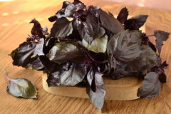 �unch of purple basil Royalty Free Stock Images
