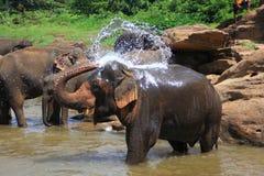 Ð•,lephant i floden royaltyfria bilder