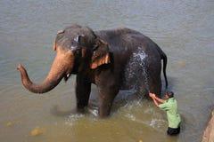 Ð•lephant λούσιμο Στοκ Εικόνες