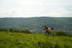 Л Ð ¾ шаÐ'ÑŒ Ð ½ а ал ьР¿ иР¹ Ñ  ких л уР³ ах Άλογο στα αλπικά λιβάδια Στοκ φωτογραφία με δικαίωμα ελεύθερης χρήσης