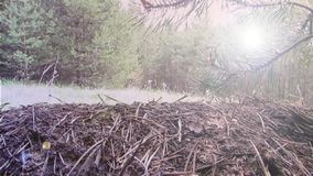 Ð在森林背景英尺长度录影的 nthill 影视素材