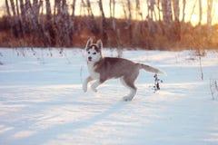 Ð 多壳的小狗享用雪 免版税库存照片