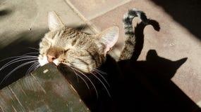 Ð 猫摩擦她的在长凳的面孔和她的阴影 免版税库存照片