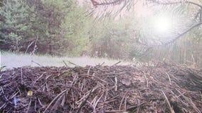Ð  nthill στο δασικό βίντεο μήκους σε πόδηα υποβάθρου φιλμ μικρού μήκους