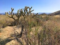 Ð ¡ acti在亚利桑那沙漠 arizonian 美国 库存照片