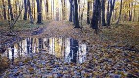 Ð ¡ gubi widok borowinowa droga przy lasem z drzewo zakrywającym żółtym ulistnieniem zbiory