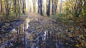 Ð ¡ gubi widok borowinowa droga przy lasem z drzewo zakrywającym żółtym ulistnieniem zbiory wideo
