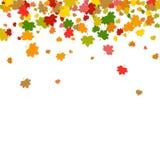Ð ¡ olorful落的叶子 在白色backgro隔绝的枫叶 皇族释放例证
