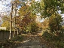 Ð ¡ ountryside ulica, droga Drzewa, wczesny jesień las Fotografia Stock