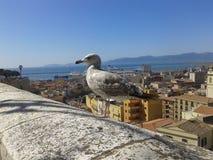 Ð ¡ pikapu seagull na tle miasteczko Fotografia Royalty Free