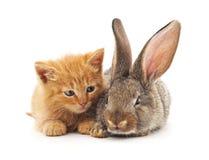 Ð-¡ an und Kaninchen Lizenzfreie Stockfotografie