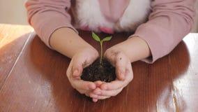 Девушка держа молодое зеленое растение в руках Концепция и символ роста, заботы, защищая землю, экологичность сток-видео