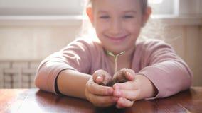 Девушка держа молодое зеленое растение в руках Концепция и символ роста, заботы, защищая землю, экологичность акции видеоматериалы