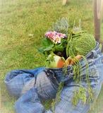 Демикотон здорового lifesytyle голубой заполненный с овощами стоковые фотографии rf