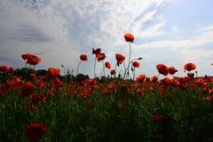 День памяти погибших в первую и вторую мировые войны, день Anzac, спокойствие стоковая фотография rf