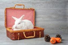 день пасха счастливая Кролик с морковью в деревянной корзине Милый кролик зайчика пасхи на деревянной предпосылке стоковая фотография